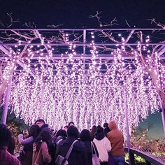 【manacam_it】さんのInstagramをピンしています。 《日本一に輝いたイルミネーション しだれ桜のイルミネーション #shorttrip#illumination#Sakura#CherryBlossoms#pink#night#Saturday#shine#beautiful#Japan》