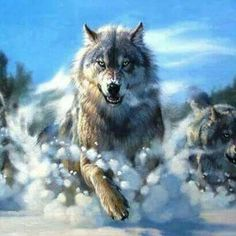 151 Best Wolf And Eagle Tattoo Design Ideas Images