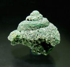 Beryl (variety emerald) replacing fossil| ©Fabre Minerals  Matecaña, El Diamante, Gachalá, Cundinamarca, Colombia.  Fossilization on emeral...