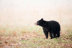 Types of Bears Found Around the World