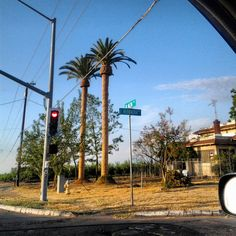 Well pruned Palm Trees.