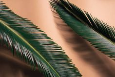 two palm leaves on a bright orange background