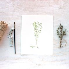 A Beautiful 8 X 10 Inch Thyme Print From My Herb Watercolor Series Printed On Gorgeous