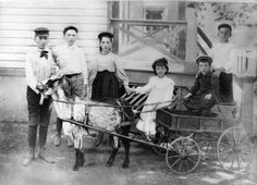 #goatvet likes this goat cart from Queens NY, 1896