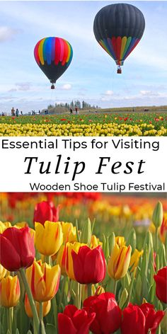 The essential guide to Oregon's best tulip festival. Tulip Fest showcases its splendor with a celebration of flowers. Tulip Festival, Flower Festival, Oregon Beaches, Oregon Coast, Oregon Flower, Cool Places To Visit, Places To Travel, Need A Vacation, Dream Vacations