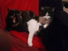 Luna , Sindy Katze   Pawshake