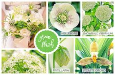 Spring Flowers Names, Flowers Names And Pictures, Flowers Name List, Early Spring Flowers, Types Of Flowers, Green Flowers, Spring Flower Arrangements, Beautiful Flower Arrangements, Beautiful Flowers