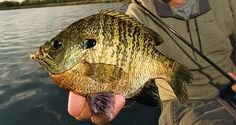 Best Baits: 15 Hottest Lures for Panfish | Outdoor Life