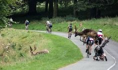 A cyclist at the Dublin City Triathlon had a mid-race collision with a deer. Usain Bolt, Cristo Corcovado, Meanwhile In Russia, Darwin Awards, Dumb People, Dublin City, Epic Fail Pictures, Walmart Photos, Sport
