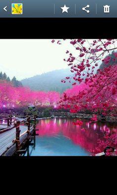 Cherry blossom lake -sakura, Japan