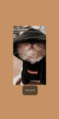 Iphone Wallpaper Cat, Funny Cat Wallpaper, Cute Tumblr Wallpaper, Cartoon Wallpaper Iphone, Anime Scenery Wallpaper, Iphone Wallpaper Tumblr Aesthetic, Cute Disney Wallpaper, Aesthetic Pastel Wallpaper, Cute Cartoon Wallpapers