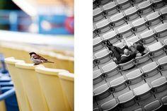 more stadium engagement photos....Callaway Gable Photography