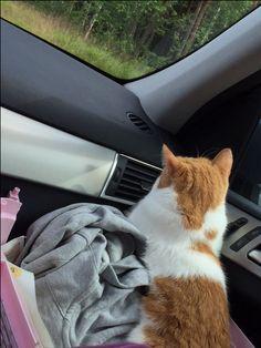 autossa matkalla mökille