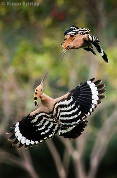 https://www.facebook.com/Birds.Lovers.1/photos/a.376390855773411.90790.375769122502251/1654360781309739/?type=3