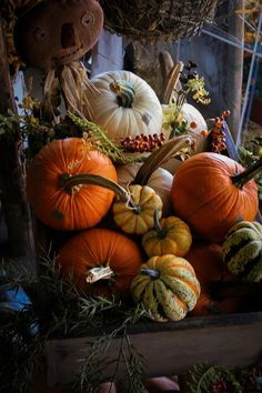 SEASONAL – AUTUMN – pumpkins can be found in golden, white, and amber hues as well as the traditional bright orange colors during pumpkin season. Harvest Time, Fall Harvest, Autumn Day, Autumn Leaves, Autumn Decorating, Decorating Pumpkins, Deco Floral, Autumn Inspiration, Fall Pumpkins