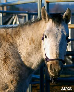No equine slaughterhouses will be permitted to open in the US in 2014. Learn more here: www.aspca.org/blog/just-us-house-reps-nixes-horse-slaughter-2014