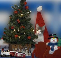 Kitty Says Happy Holidays.  From my eyes, through the view finder to the click of the shutter. I hope you enjoy these moments in time that have been captured. Stop by and check out some of my other Galleries on Fine Art America. Just simply search for Thomas Woolworth. Photographer (1977), Digital Artist and Owner V'CAD Support (since 1987). email: mailto:Tom510@aol...