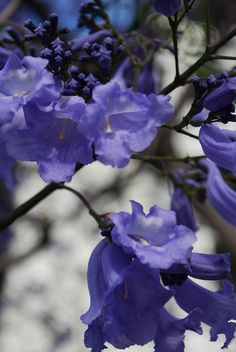 Purple flowers are so beautiful!