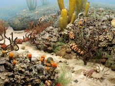 The Permian period saw the creation of the supercontinent Pangaea, where shallow seas in and around the huge landmass offered a home to an abundance of life. This diorama at the University of Michigan's Museum of Natural History shows some of the flora and fauna that thrived in Permian seas, including trilobites, gastropods, clams, nautiluses, and corals.