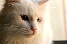 my lovely Cat <3