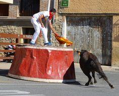 Santacara: Vacas Hermanos Marcen Cows, Siblings, Zaragoza
