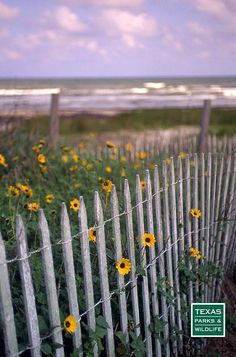 Galveston, Texas - cherished memories of many long summer days spent at Galveston Island State Park before hurricane Ike ravaged her beautiful shore