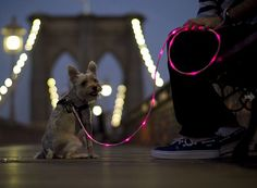 The Pup Crawl Lights-Up Leash - Things That Go Bark in the Night - This glowing leash keeps you and your pup visible from a quarter mile away, and each purchase helps benefit shelter animals.