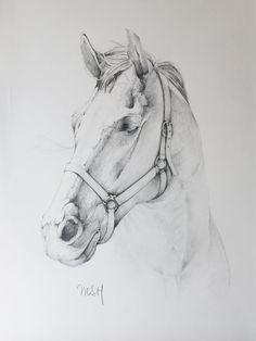cabeza de caballo                                                                                                                                                      Más
