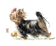 yorkie drawings | Running Yorkie Poster By Debra Jones