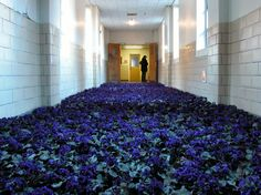 """Incredible. """"Bloom: 28,000 Potted Flowers Installed at the Massachusetts Mental Health Center... After four public days of """"Bloom"""", the building was closed for good and we delivered all 28,000 flowers to shelters, half-way houses, and psychiatric hospitals, which is why I didn't want to work with cut flowers. I wanted these flowers to continue onward, after the installation."""""""