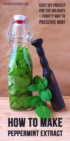 Learn how to make a mint extract with fresh peppermint and your favorite clear liquor. Homemade extracts are perfect for holiday gifts and cost less than store-bought extracts! It& also a good way to use up the summer harvest of mint leaves. Homemade Spices, How To Make Homemade, Homemade Gifts, Homemade Liquor, Homemade Bagels, Homemade Liqueur Recipes, Homemade Seasonings, Do It Yourself Food, Mint Extract
