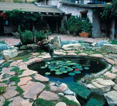 9 Tips For Planning The Perfect Pond