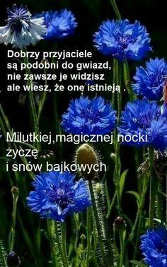 Nick Vujicic, Magic Day, Motto, Sunshine, Quotes, Blog, Greeting Card, Poster, Creative