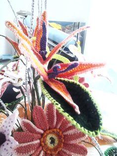 Gerbera fiori all 39 uncinetto cactus plants plants e for Il blog di sam piante grasse