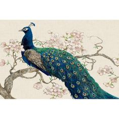 Showcasing the rich jewel tones of one of nature's most beautiful birds, the Marmont Hill Peacock and Blossoms II Painting Print on Wrapped Canvas. Canvas Art Prints, Painting Prints, Canvas Wall Art, Fine Art Prints, Framed Prints, Paintings, Most Beautiful Birds, C 18, Wrapped Canvas