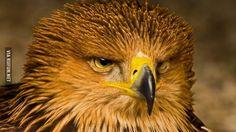 Чего уставились?  #орел #взгляд