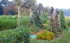 How to put the practices of permaculture to use in your own back yard.