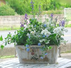 "arrangements in wooden boxes | : Natural wood planter bonsai! ""Manager arrangements ~ * wood BOX ..."