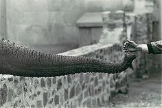 50 чудесных черно белых снимков от мастеров фотографии