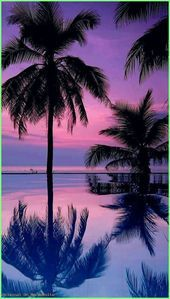 Check out this awesome collection of Palm Trees wallpapers, with 45 Palm Trees wallpaper pictures for your desktop, phone or tablet. Tree Wallpaper Iphone, Beach Wallpaper, Summer Wallpaper, Wallpaper Backgrounds, Ocean Backgrounds, 1080p Wallpaper, Trendy Wallpaper, Wallpaper Pictures, Beautiful Nature Wallpaper
