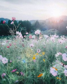 Painting inspiration, field of wildflowers with setting sun.