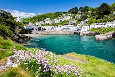 Thrift on the cliffs near Polperro in Cornwall, England, UK iStock_000018774382_Large-2