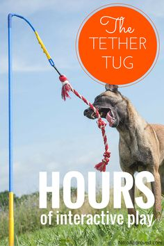 Your spring pole dogs pinterest spring dog and doggies nitroapproved tether tug dog toy puppy lovediy solutioingenieria Image collections