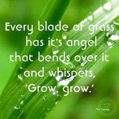 Every Blade of Grass Quote Magnet zazzle_magnet