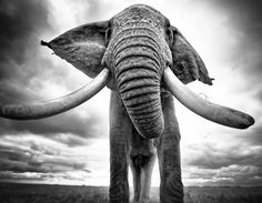 """natgeoyourshot: """"Top Shot: Close Encounters of the Elephant Kind  Top Shot features the photo with the most votes from the previous day's Daily Dozen. The Daily Dozen is 12 photos chosen by the Your Shot editors each day from thousands of recent..."""