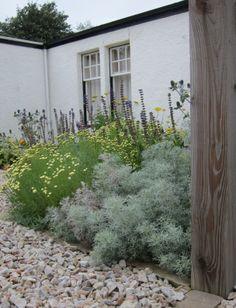 Planting for a hot sunny spot in an East Lothian garden by Joy Grey
