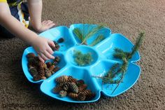 Counting with Pinecones | an nature and number exploration activity for toddlers and preschoolers Pine Cones, Dog Bowls, Preschool, Google Search, Nature, Preschools, Naturaleza, Kid Garden, Early Elementary Resources