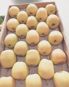 Bite me.... #EnjoyFruit #ByDelBello #Lovita #ItalianFlavour #TasteMe #LadyApple #FromItalyWithLove #EatItalian #WeAreComing #WeAreReady #FruitLover #instafood #PremiumQuality #GoldenDelicious #ApplesGoldenDelicious #apples #amazing #mangiamela #melamangio #EatHealthy #fruit #food #LoveNature #gnam #foodporn #fruitporn #Canada