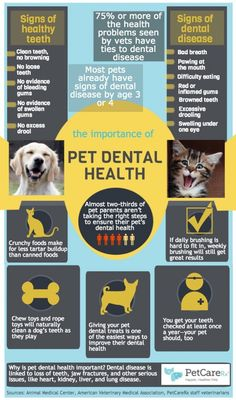 Infographic: Importance of Pet Dental Health