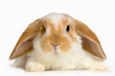 Learn English Alphabet With Rabbit - Animation